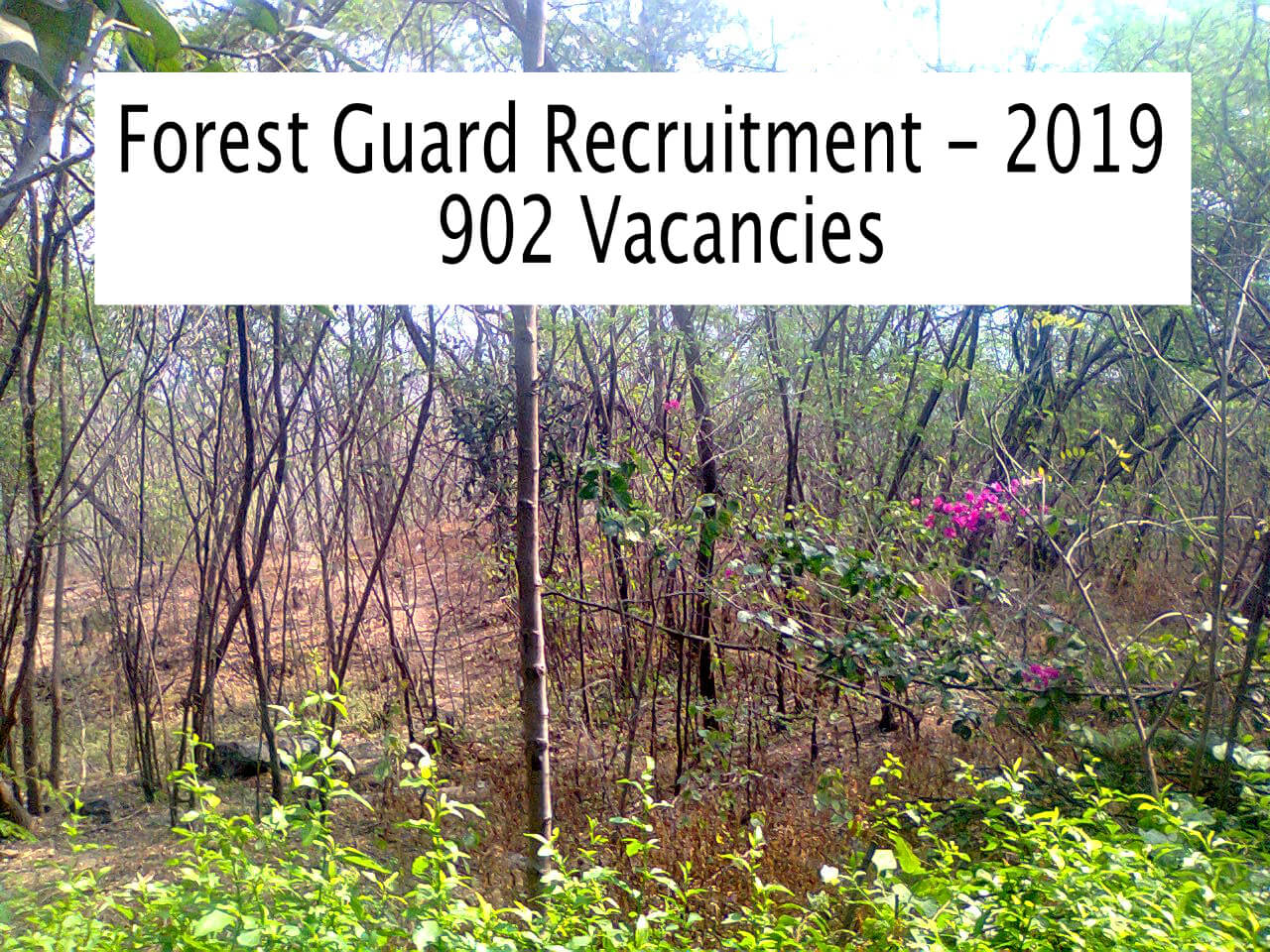 Forest Guard Recruitment 2019 - 902 Openings